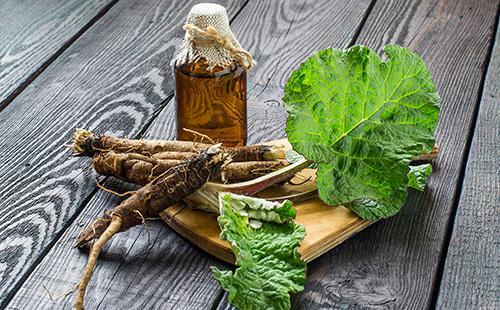 Корни, листья и масло из лопуха